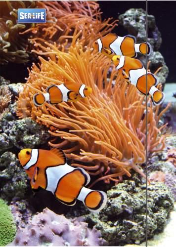 RNK Verlag Zeichnungsmappe Sea Life, DIN A3
