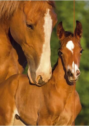 Gummizugmappe A3 Pferde