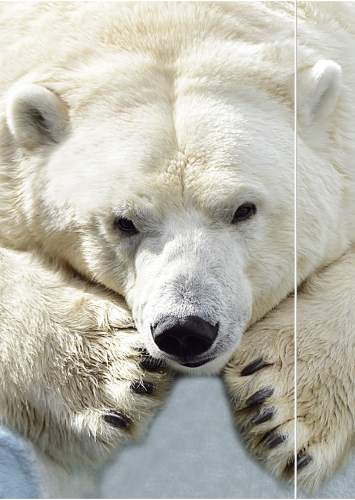 Gummizugmappe A3 Eisbär