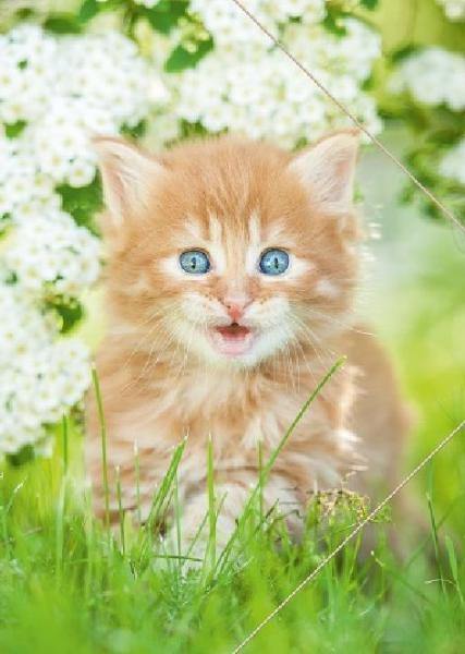#3xZeichenmappe A3 PP Katze