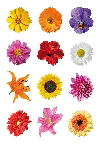 HERMA Sticker DECOR Bunte Gerberas