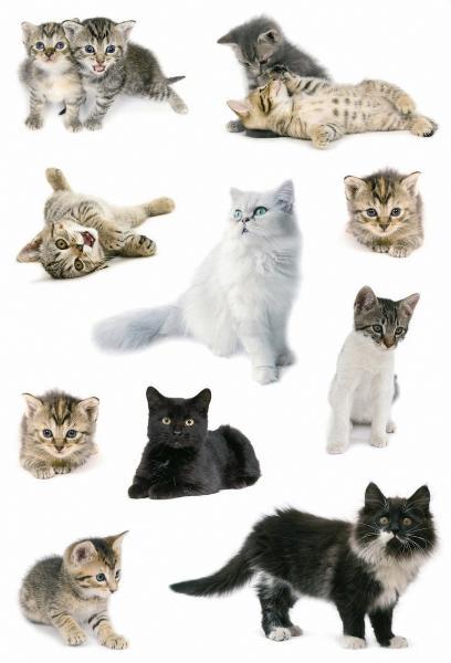 HERMA Sticker DECOR Katzenfotos